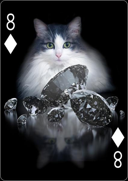 kitten2.jpg