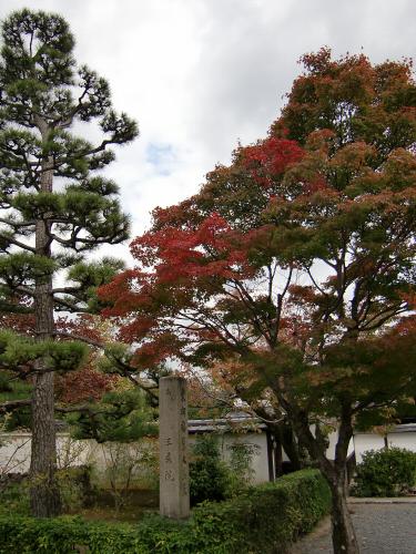 嵐山の紅葉2012秋16