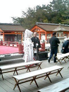 台風後厳島神社04