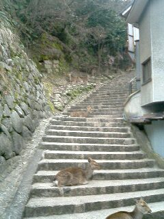 台風後厳島神社18