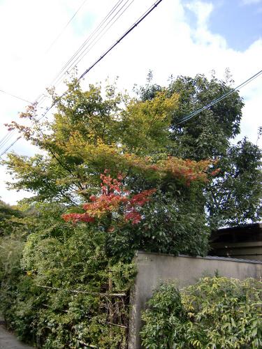 嵯峨野近辺景観05
