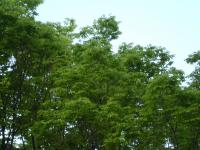 バルコニーから眺める新緑