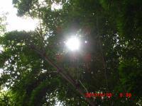 20130623 936 不知八幡森の太陽さん
