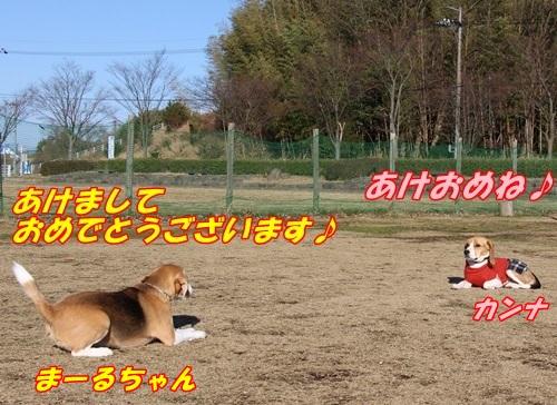 IMG_7819.jpg