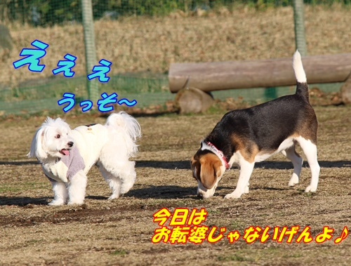 IMG_8382.jpg