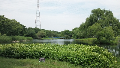 kisogawasuien04.jpg