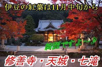 kouyo_2013090211063834e.jpg