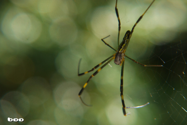 自由な蜘蛛