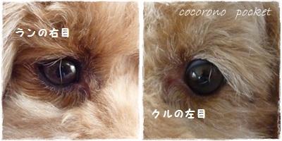 1cats_20120607191346.jpg
