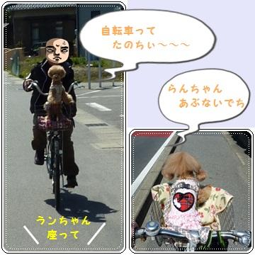 cats_20120411112458.jpg