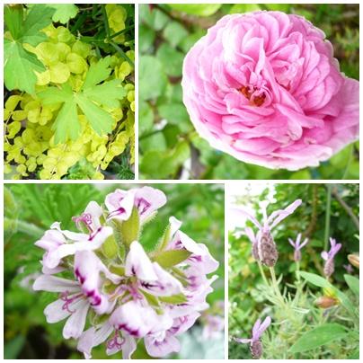 春の花 その1