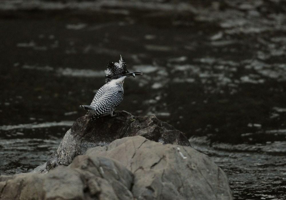 20130227-fish-002.jpg