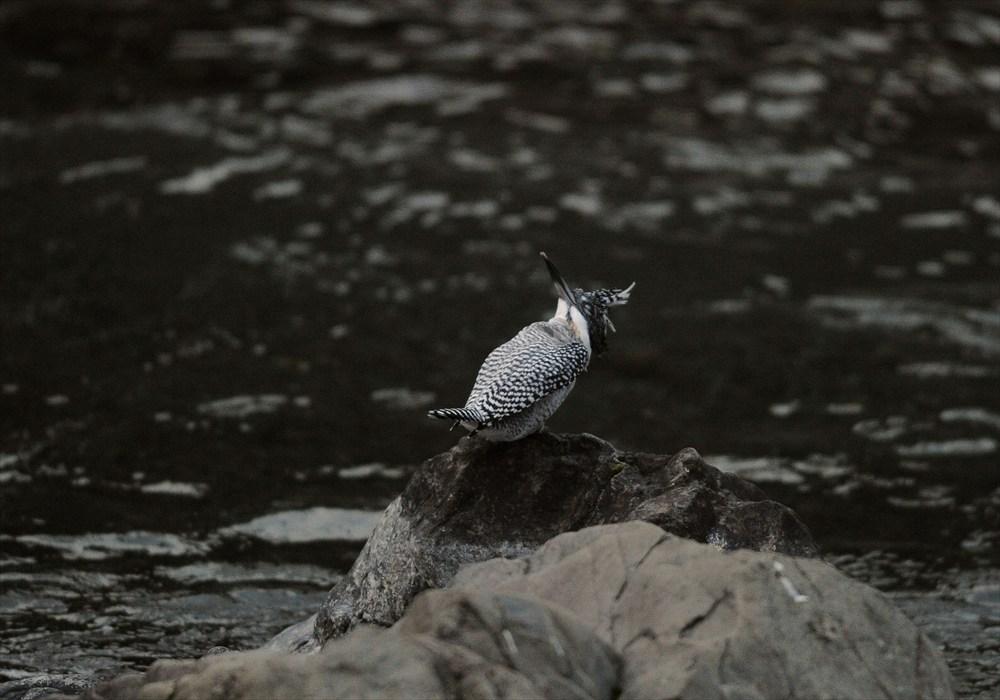 20130227-fish-003.jpg