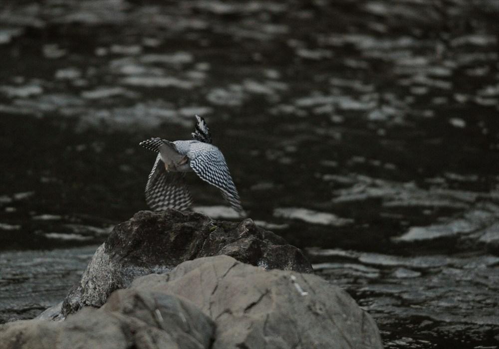 20130227-fish-005.jpg