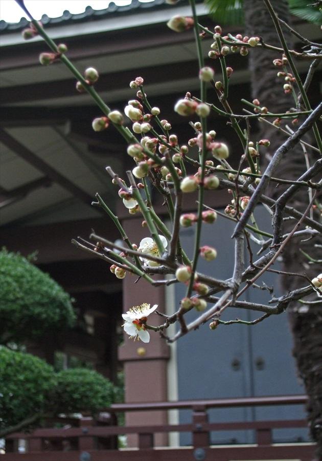 20130309-fukei-005.jpg