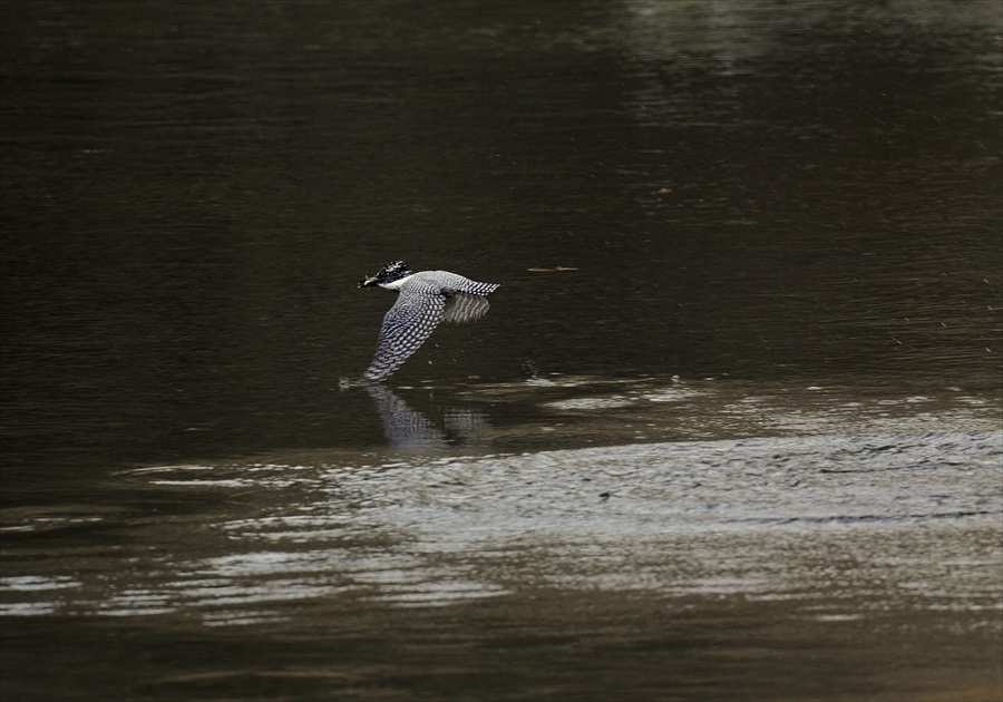 20130311-fish-001.jpg