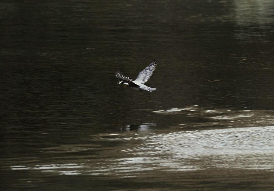 20130311-fish-002.jpg