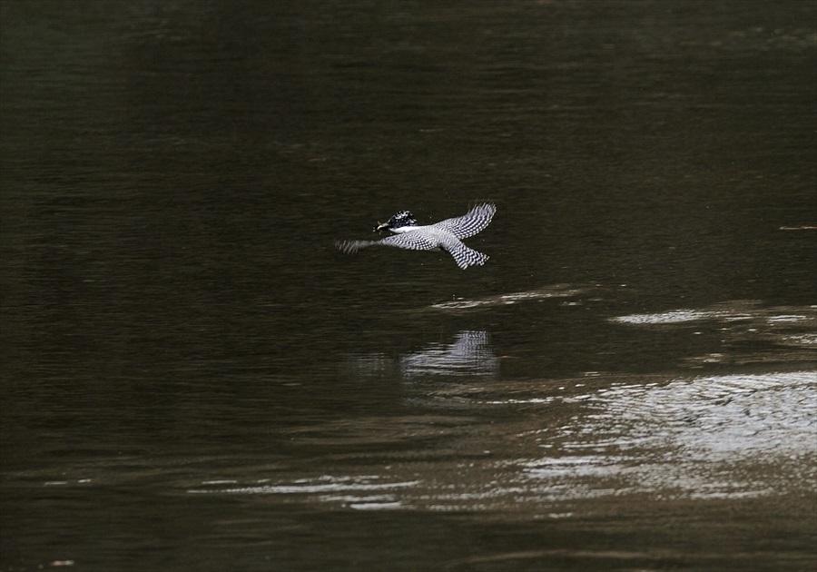 20130311-fish-003.jpg
