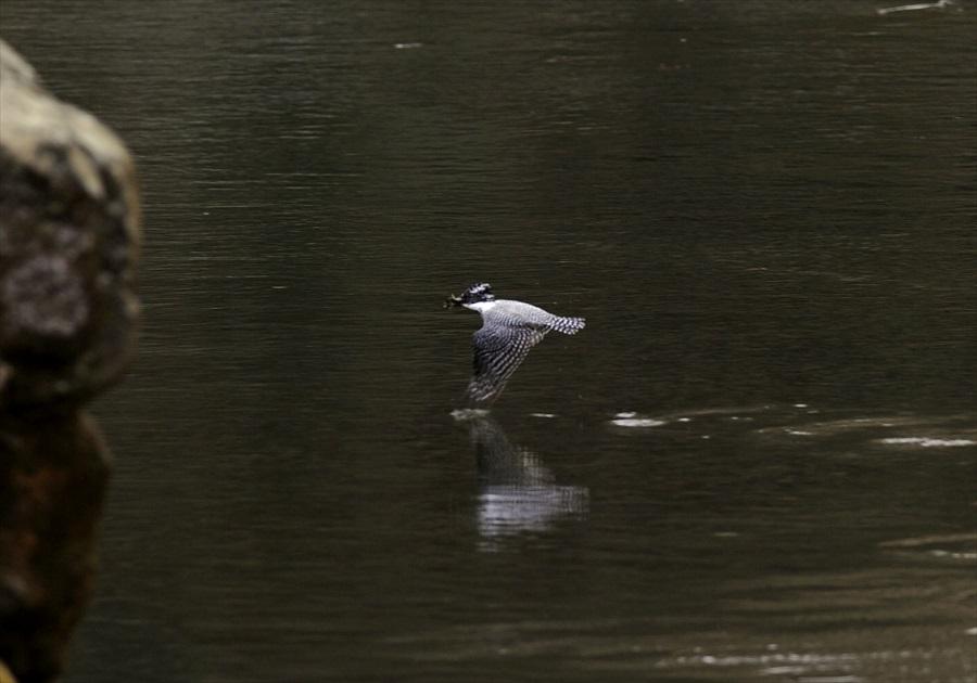 20130311-fish-005.jpg