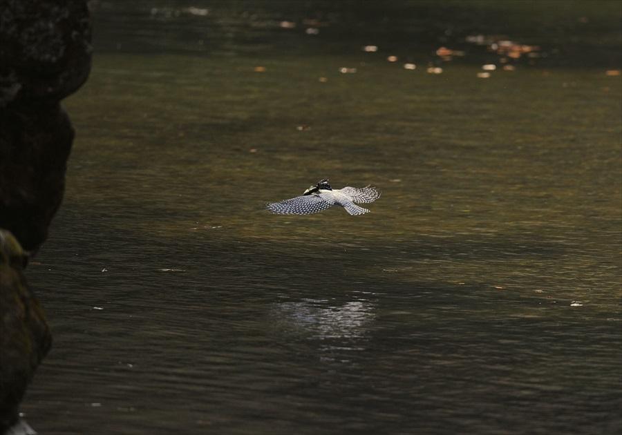 20130314-fish-006.jpg
