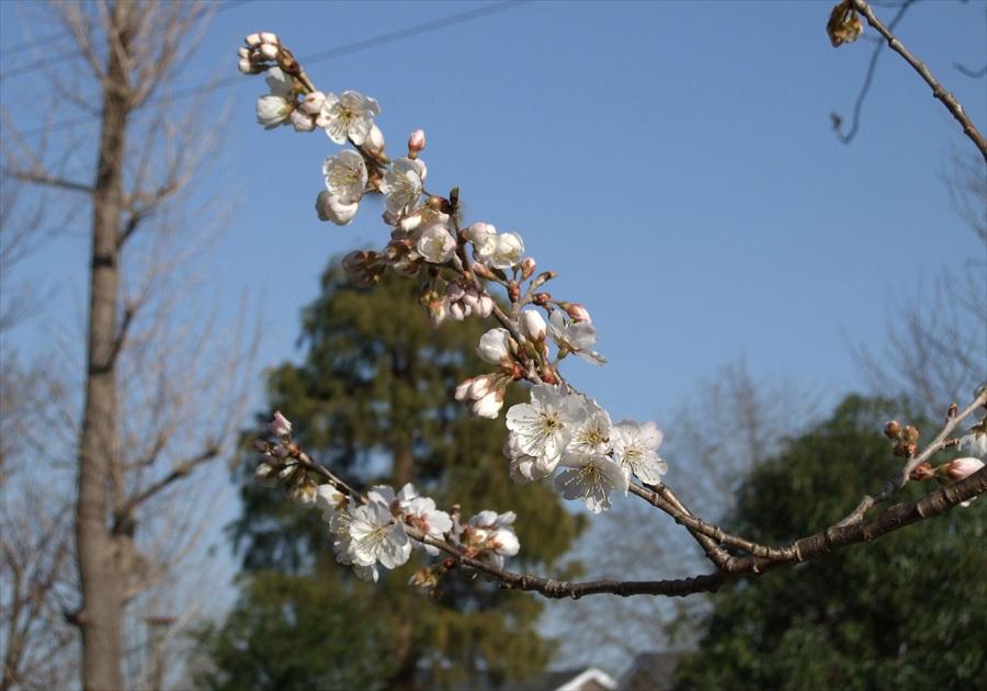 20130315-fukei-003.jpg