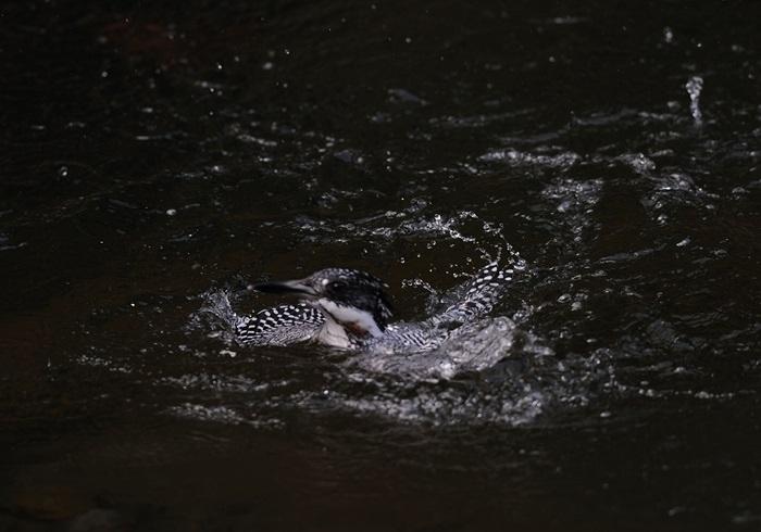 2013307-fish-005.jpg