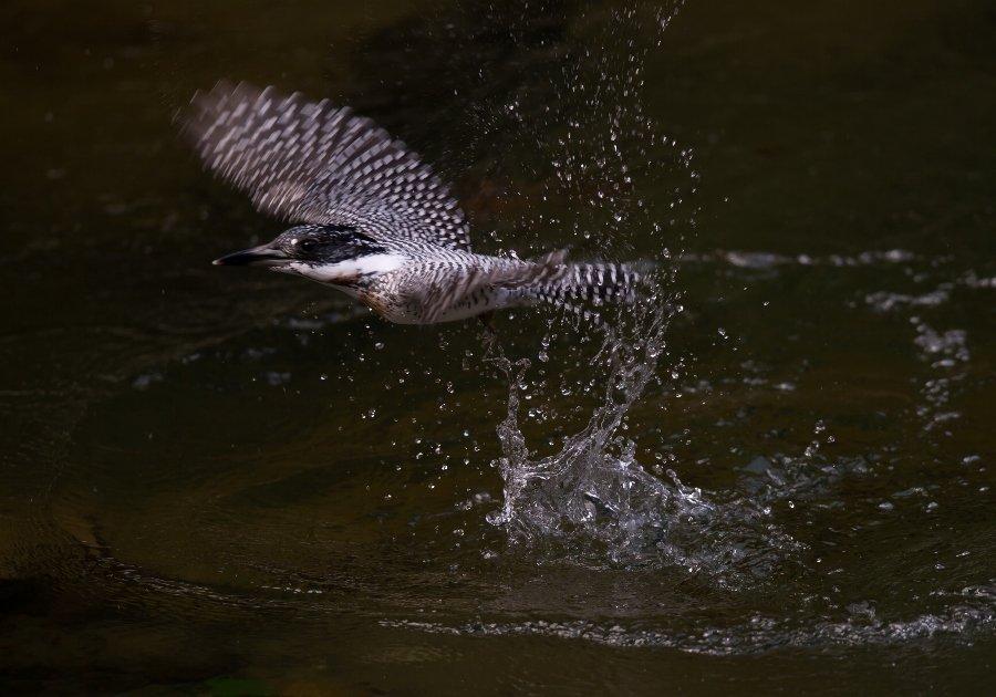2013307-fish-007.jpg