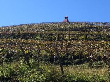201411 かつぬまワイン祭り1