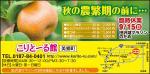 2013年9月号のアンドナウ広告