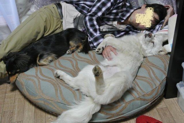 マヒナパパと昼寝