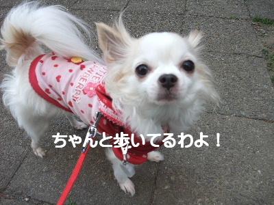 2013_03092013-3-10 お散歩0036