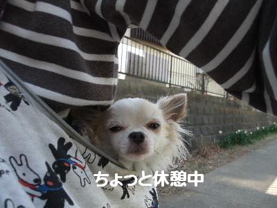 2013_03092013-3-10 お散歩0010