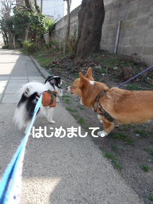 2013_03092013-3-10 お散歩0024