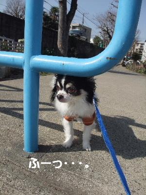2013_03092013-3-10 お散歩0016
