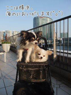 ここは横浜