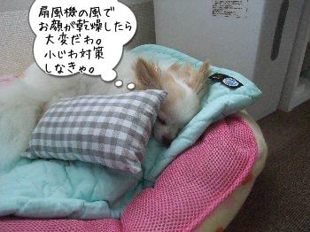 扇風機の風邪