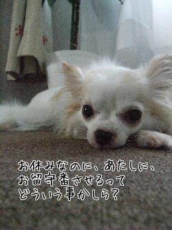 お休みなのに