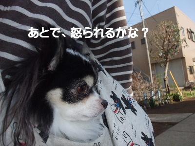 2013_03152013-3-150022.jpg
