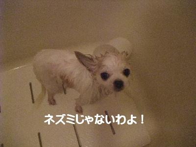 2013_03172013-3-180003.jpg
