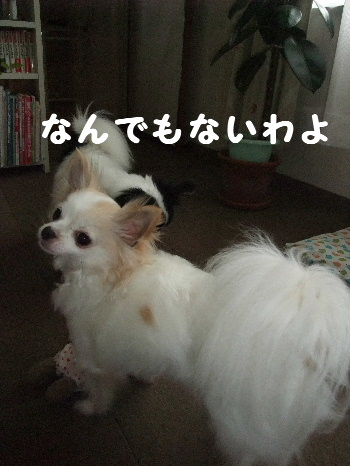 2013_04062013-4-60007.jpg