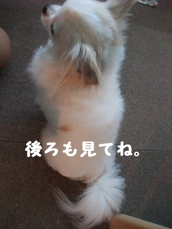 2013_04144-130002.jpg