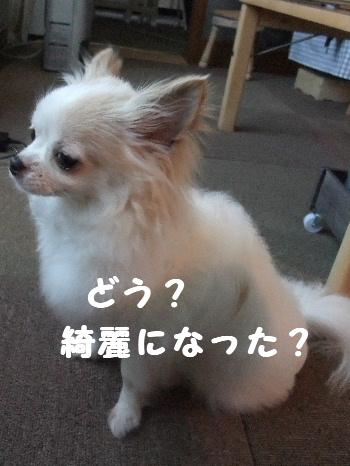 2013_04144-130004.jpg