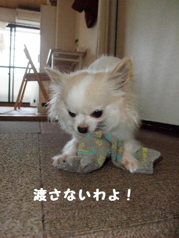 2013_04164-160004.jpg