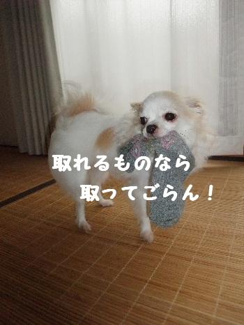 2013_04174-170021.jpg