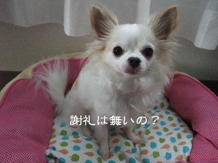 2013_04264-260007.jpg