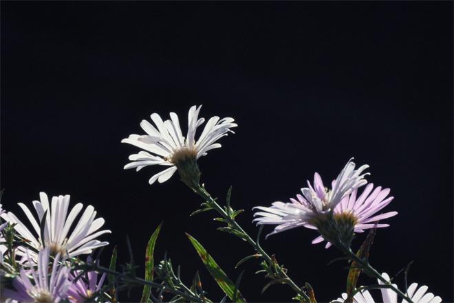 30929-10.jpg