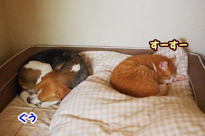 添い寝 2