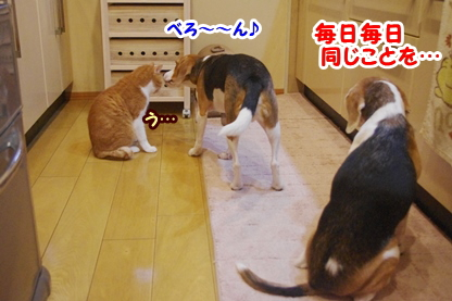 変わり映え 4