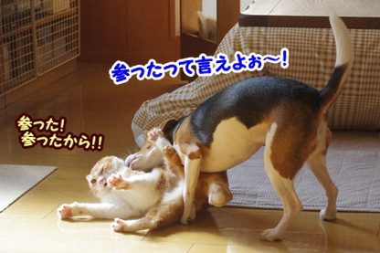 ひな頼み 8