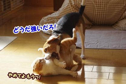 ひな頼み 4